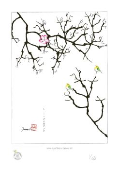 white eyed birds in sakura XVI